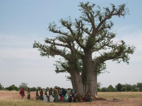 baobab plus villagers